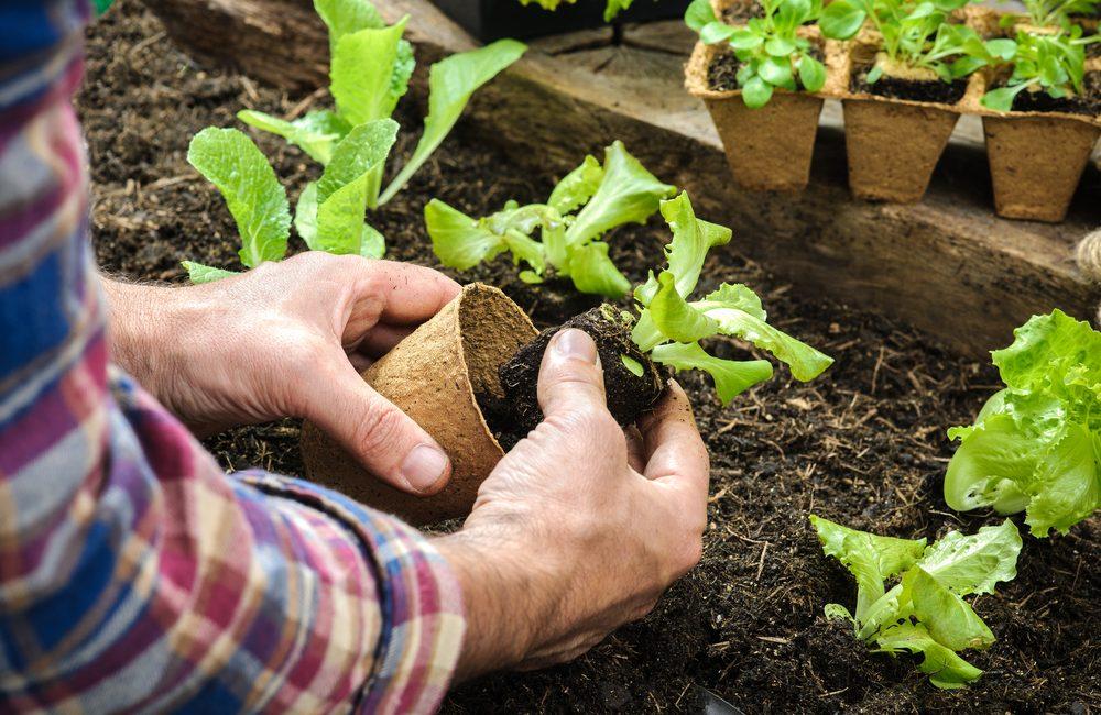 Gør haven til din hobby